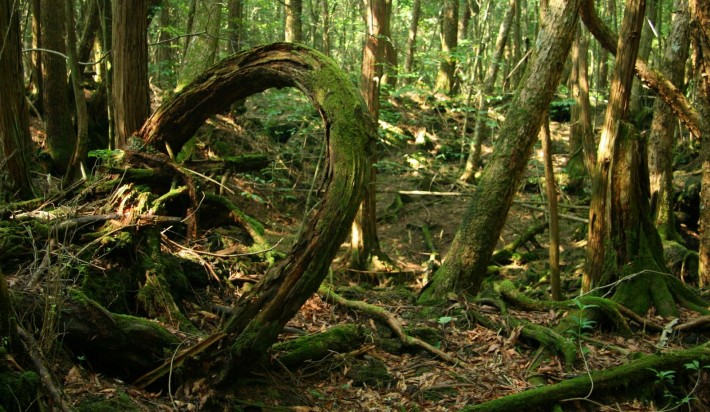 Haunted Places - Aokigahara - Japan