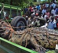 Killer Super Crocodile Caught in Uganda