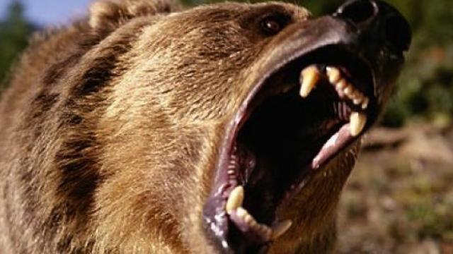 David Hackls Grizzly Movie Trailer