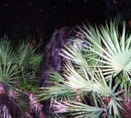 The Florida Skunk Ape and Skunk Ape Sightings