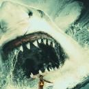 Eli Roth to Direct Prehistoric Shark Movie MEG