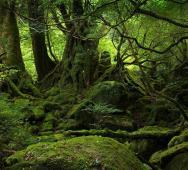 Japan's Aokigahara Forest: Suicide Forest True Story Documentary [Video]