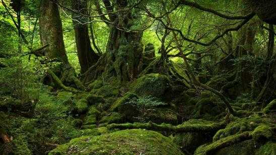 Japans Aokigahara Forest: Suicide Forest True Story Documentary [Video]
