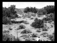 The Beast of Yucca Flats (1961) - Trailer