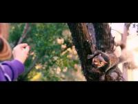 Timur Bakmambetov Squirrels - Sales Trailer